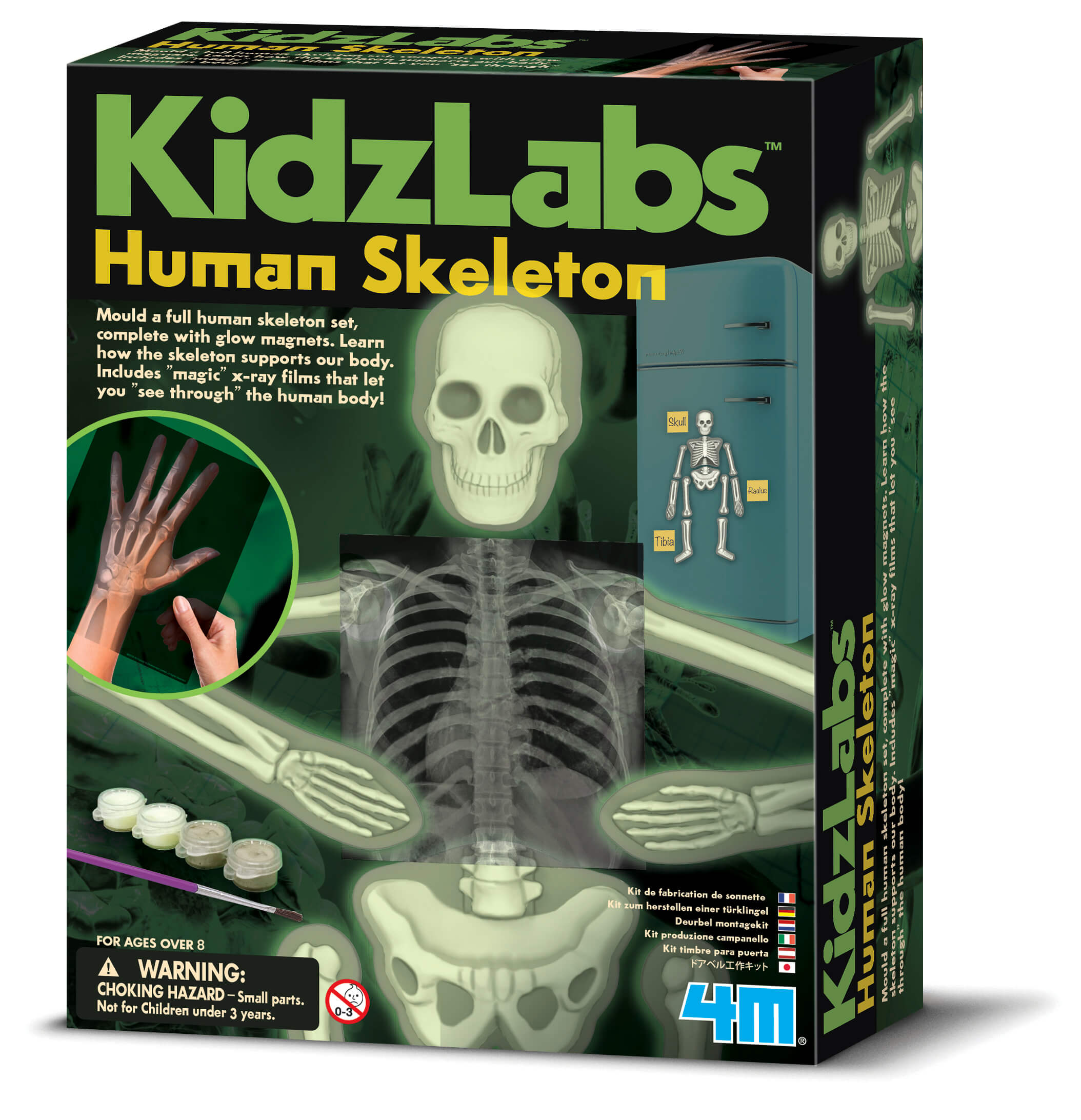 Image of   Glow Human Skeleton fra 4M KidzLabs - Byg et selvlysende skelet