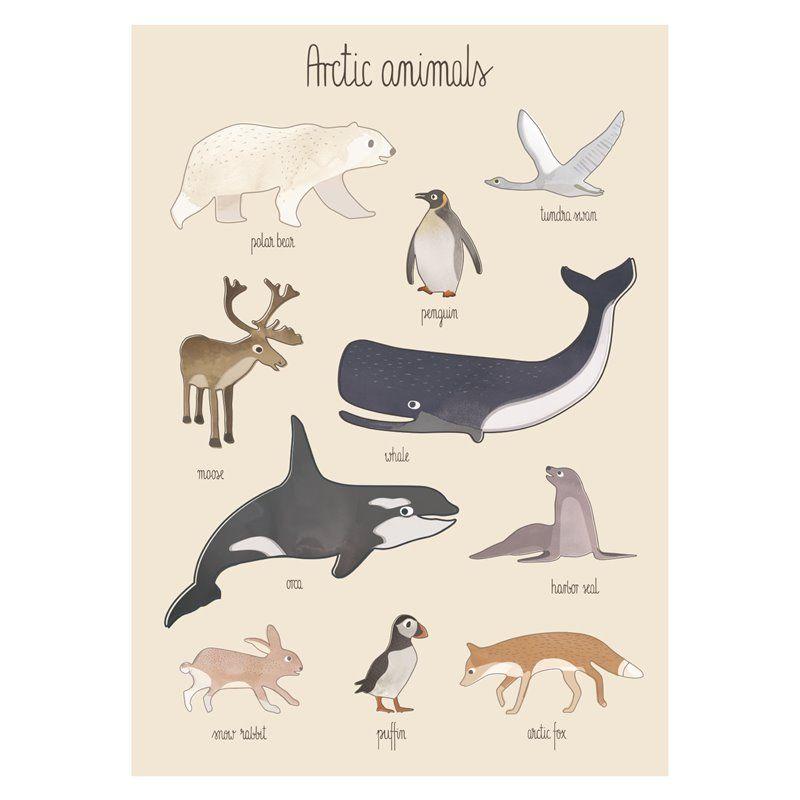 Image of Plakat fra Sebra - Arctic animals (8003201)